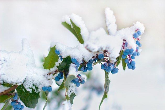 Mahon je nádherný celou zimu.
