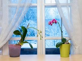 Co udělat s orchidejemi před zimou