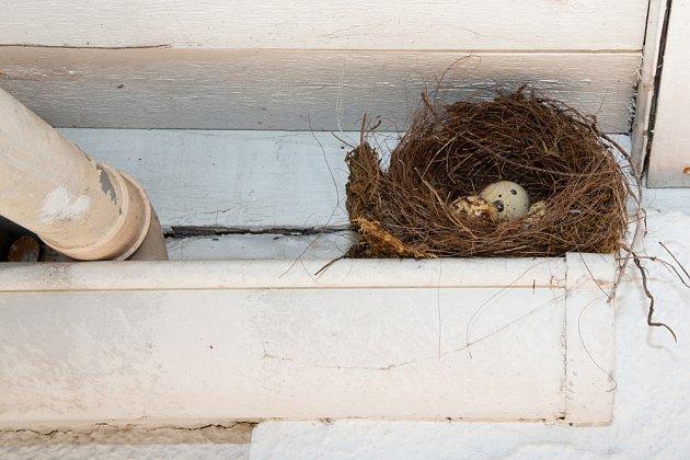 Ptačí hnízdo v okapovém žlabu.