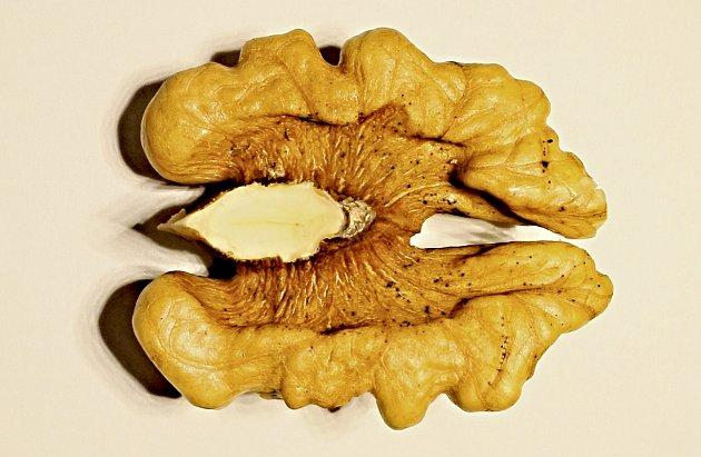 Na jádrech ořechů odrůdy Jupiter se objevily tmavé tečky