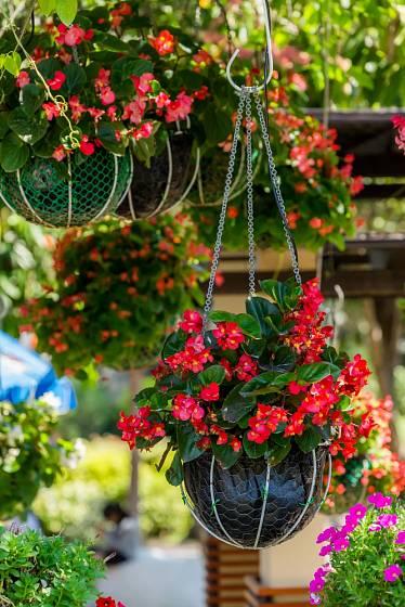 Zruční kutilové si mohou sami vyrobit závěsné květináče doma.