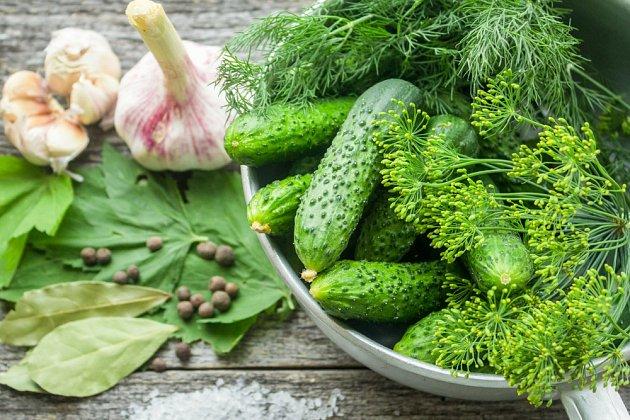 Každý rodina má osvědčený recept na lahodný lák, díky němuž dostanou okurky nezapomenutelnou chuť.