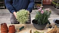 Když rostliny správně naaranžujeme, obsypeme je substrátem.