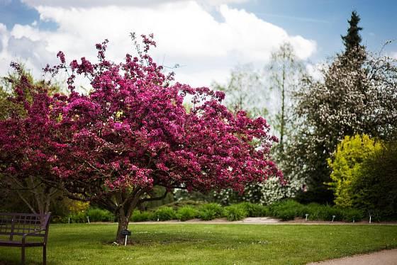 Jaro v Ornamentální zahradě.