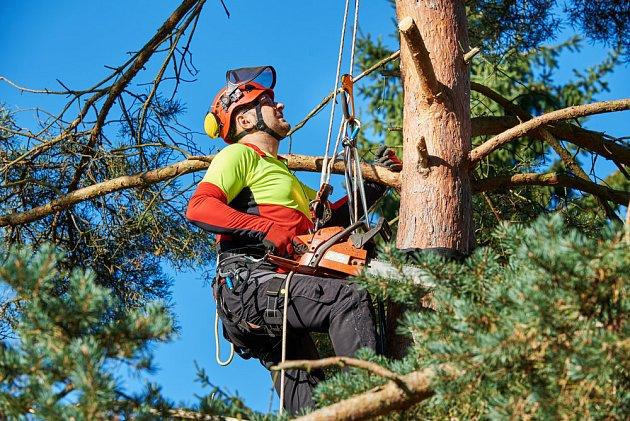 Vyvázání větví do vrchu je pomůže ochránit. Pokud dojde k olámání větví, musí se větve odstranit.