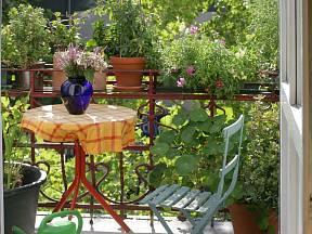 Pokud si chcete ze svého balkonu nebo terasy udělat oázu klidu plnou zeleně a nejrůznějších květin, vždy myslete na to, na jaké světové straně se nachází.