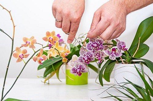 Stvol nemusíte buď stříhat vůbec, nebo jej můžete ustřihnout kdekoliv po celé délce, ale máte možnost ho i celý oddělit, hned na bázi rostliny.