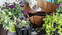 Do závěsných košů vždy využijte speciální zeminu s přídavkem živin a hnojiva.