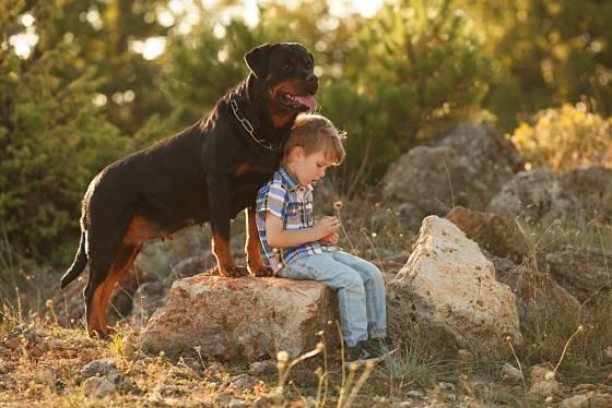 Rotvajler je nebojácný, velmi chápavý pes věrný svému pánovi.