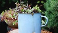Do starého smaltovaného hrnce, který už dosloužil, vysaďte pár sukulentních rostlin.