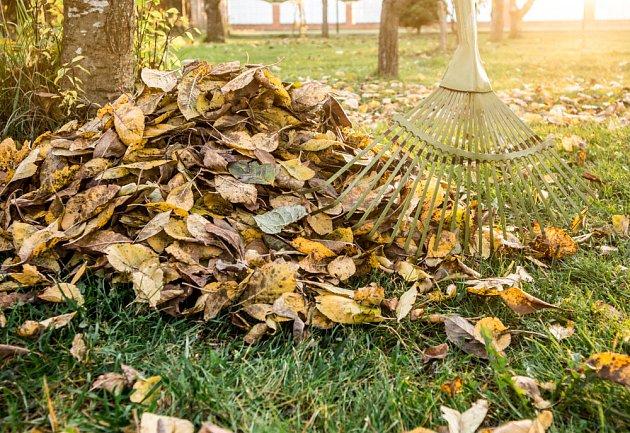 Listí pod ovocnými strom bývá vhodné shrabat, přezimují v něm spory nemocí