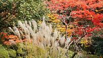 Japonské javory a okrasné trávy zdobí zahradu i na podzim