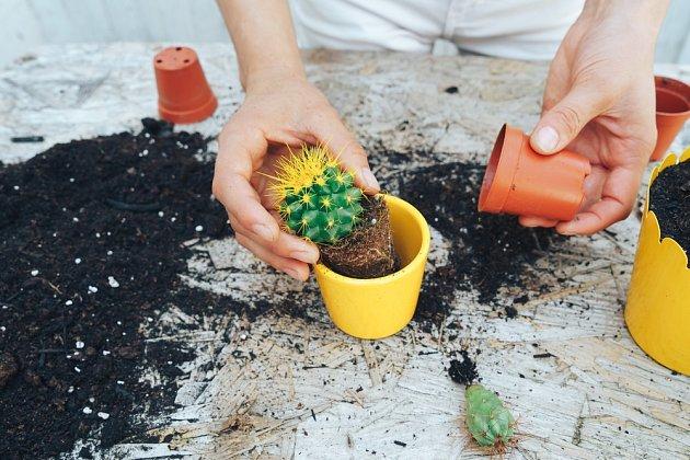 Do přichystaného květináče dejte drenážní vrstvu