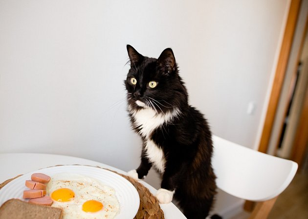 Mnohé naše pokrmy nejsou pro kočky vhodné.
