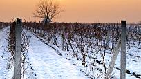 V zimě vinice odpočívá