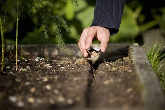Pěstování zeleniny ze semen se vyplatí