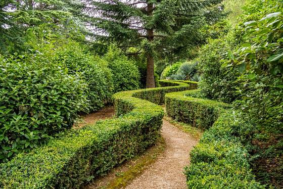 Živý plot jako výjimečný prvek zahrady