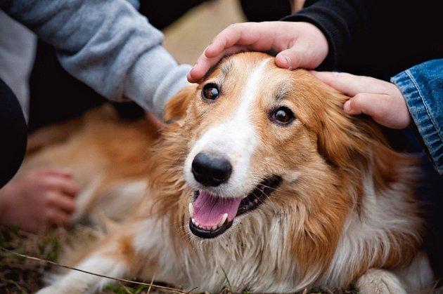 Pes je nejlepším přítelem člověka již stovky let.