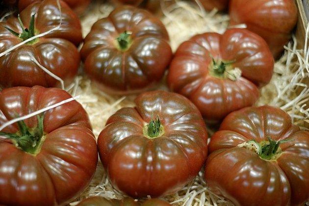 rajče odrůdy Cherokee purple