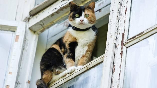 Kočka se snadno dostane z bytu nejrůznějšími otvory.