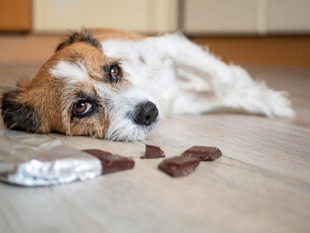 Potraviny obsahující kofein mohou mít pro psa fatální následky.
