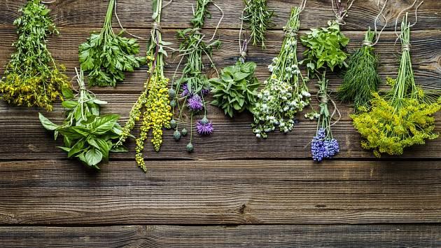 Bylinky jsou výbornými partnery, ale i ochránci zeleniny