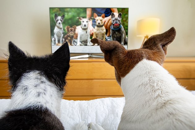 Psy v televizi dokážou skutečně zaujmout jen věci, které znají.
