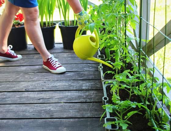 Vlastní ovoce i zelenina vypěstujete na balkónu