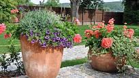 V prostorných nádobách lze rostliny kombinovat
