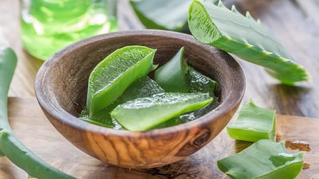 Aloe vera je rostlina s hojivými účinky