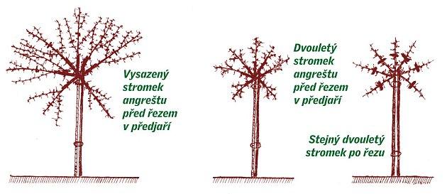 řez mladých stromků