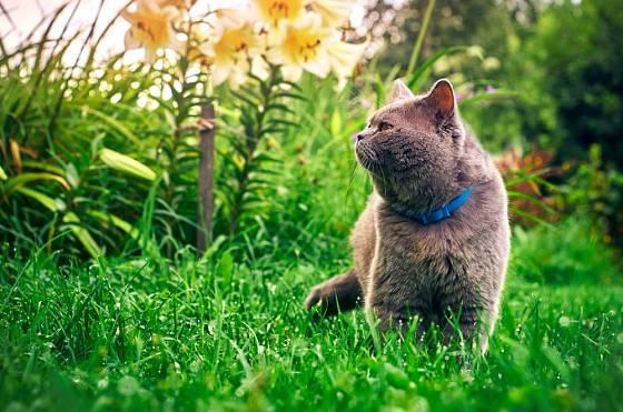 Někomu kočky na zahradě nevadí, jiní je vyhánějí a plaší