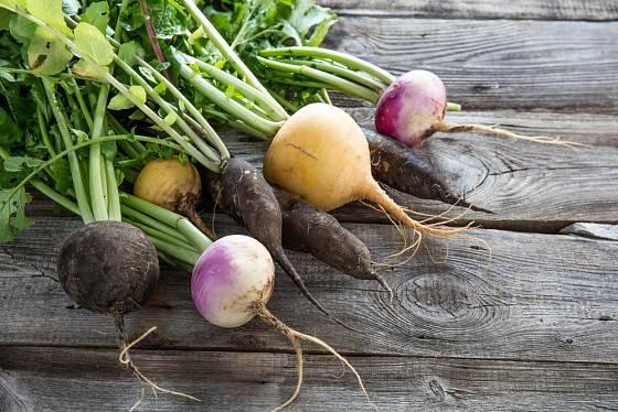 Odrůdy tuřínu