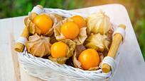 Plody mochyně peruánské