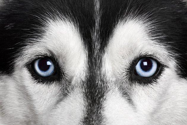 Co vlastně pes vidí?