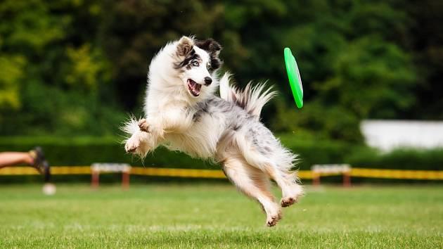 Pro psy jsou dobře viditelné předměty v pohybu.