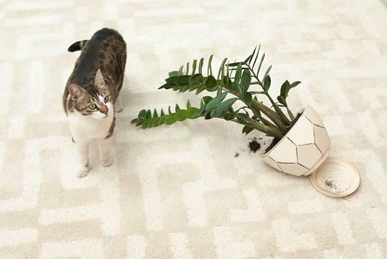 Které pokojové rostliny lze pěstovat v domácnostech obývaných zvířaty?