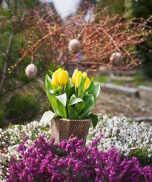 Velikonoční výzdoba hrobu - vřesovce, tulipány a vajíčka.