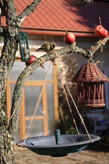 zvonek na stromě s krmítky a napajedlem
