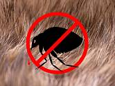 Blechám vstup zakázán. Měli bychom své psy i kočky před nimi chránit
