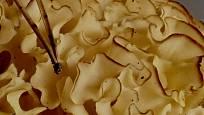 Kotrč kadeřavý patří k houbám, které se obtížně čistí.
