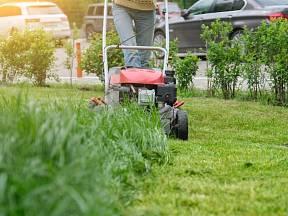 Jak často sekat trávník