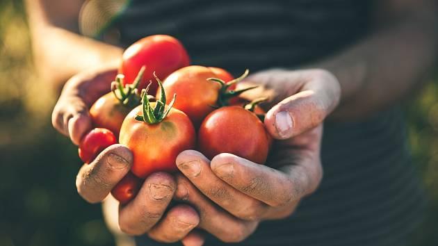 samosběr zeleniny