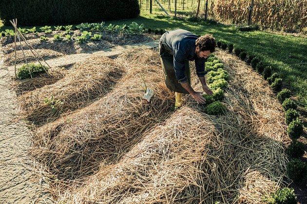 Sláma chrání půdu i zeleninu