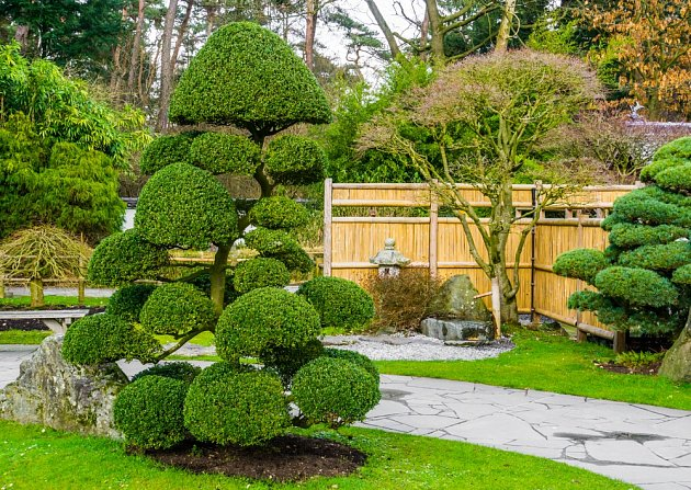 Umělecký střih dřevin v japonských typech zahrad.