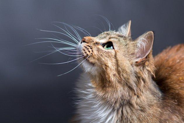 Hmatové vousy umožňují kočkám orientaci i v naprosté tmě.