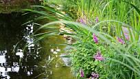 Vodní rostliny, které jezírko čistí, ho zároveň zdobí