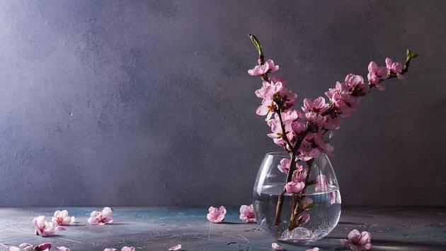Pro kvetoucí barborku se hodí i třešně okrasné, například sakura