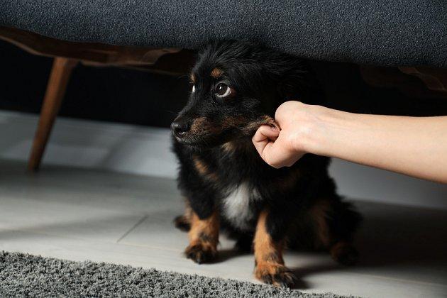 Psa můžeme uvést do stresu svým chováním
