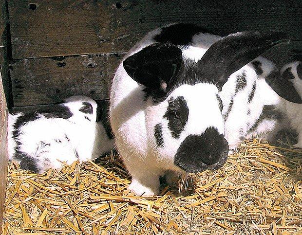 Samice s mláďaty